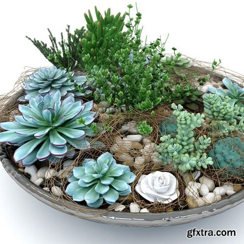 Succulent Composition Plants
