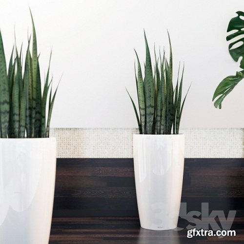 Sansevieria, Monstera - 3D Plants