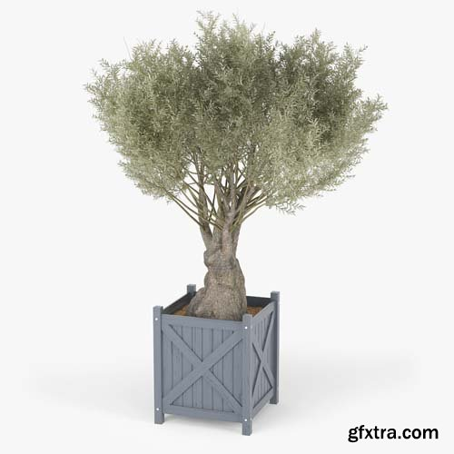 Cgtrader - Olea europaea 3D model