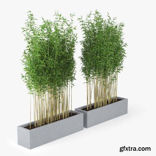 Cgtrader - Bambus Muriel 3D model