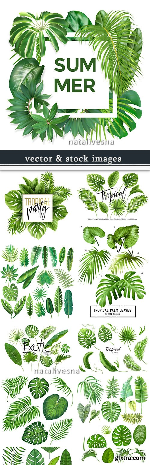 Exotic summer leaves of tropical trees collection