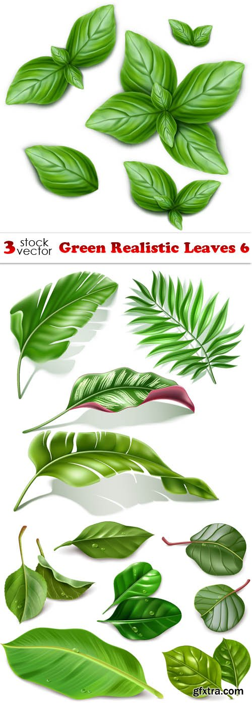 Vectors - Green Realistic Leaves 6