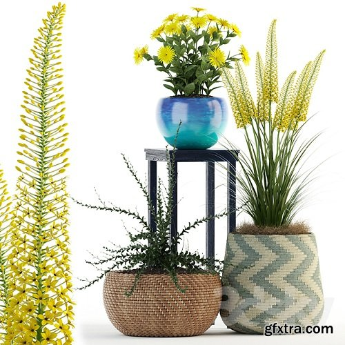 Plants collection 146