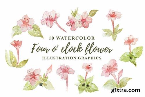 10 Watercolor Four o\' clock Flower Illustration