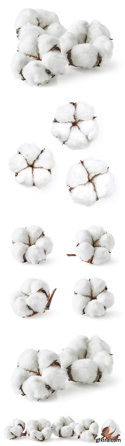 Cotton Isolated - 5xJPGs