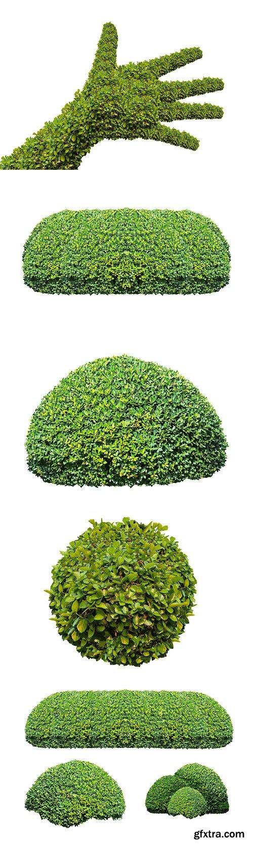 Green Bush Isolated - 15xJPGs