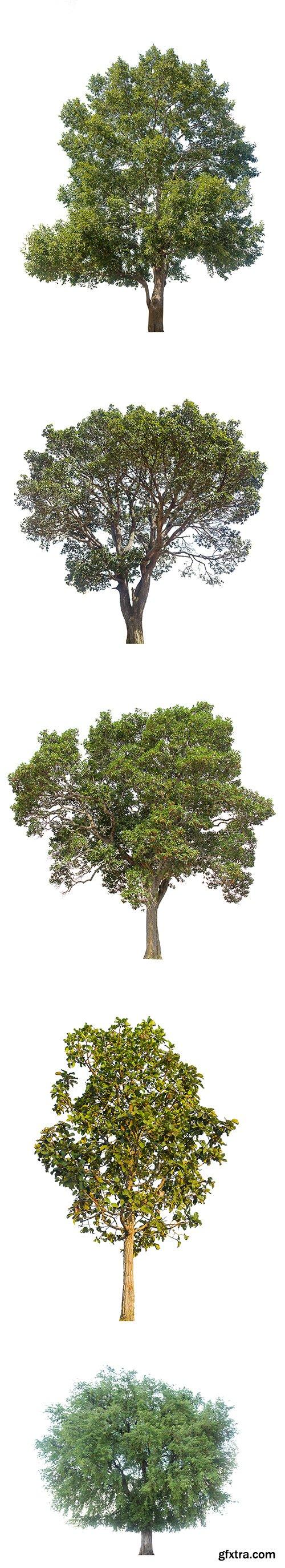 Green Tree Isolated - 5xJPGs
