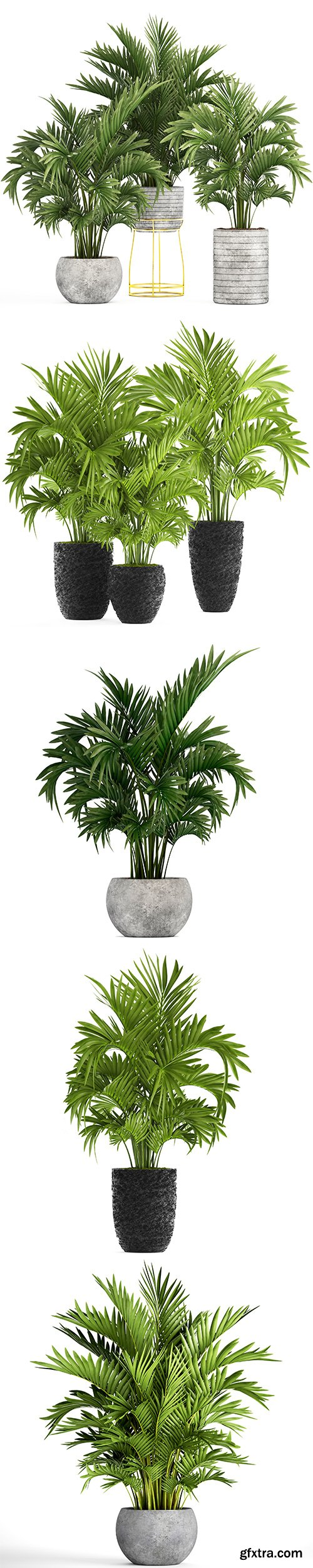 Howea Palm Isolated - 6xJPGs