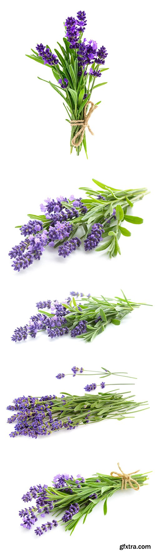 Lavender Isolated - 5xJPGs