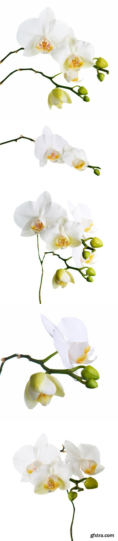 Orchid Isolated - 10xJPGs
