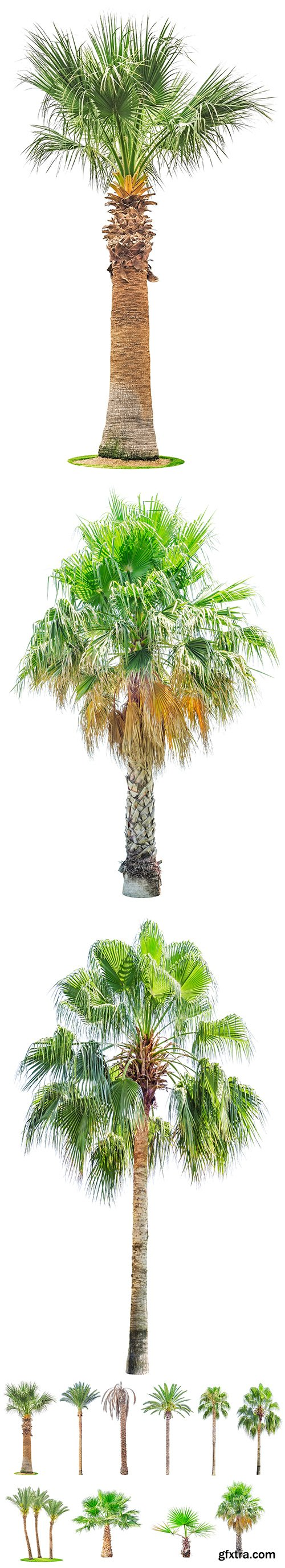 Palm Tree Isolated - 7xJPGs