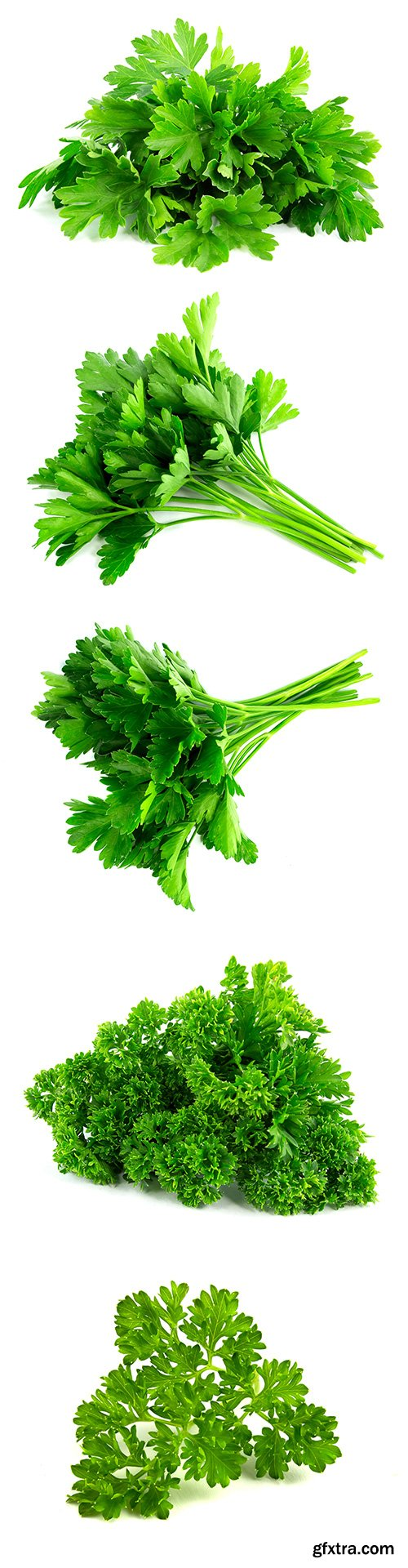 Parsley Isolated - 8xJPGs
