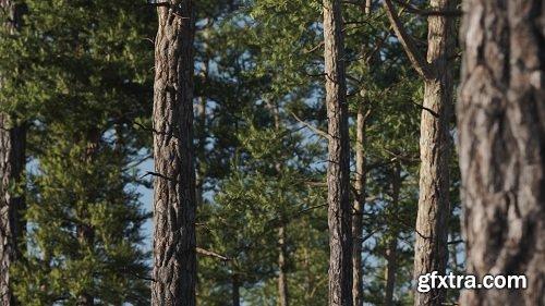 Gumroad – Vertex Trees – Scots Pine – 01