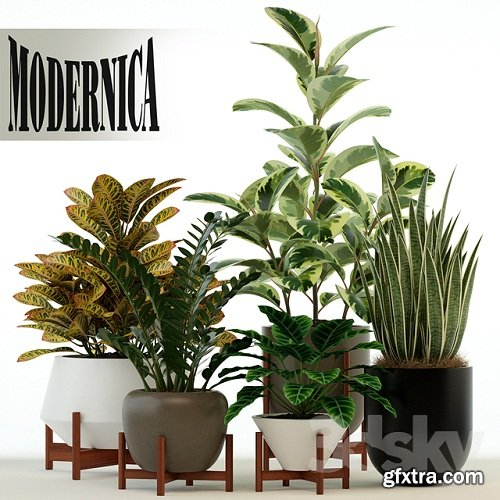 Plants collection 75 Modernica pots