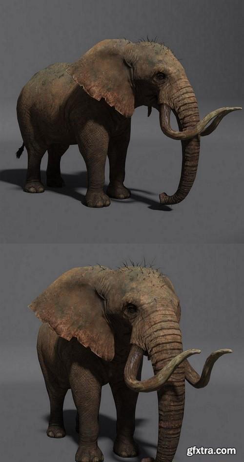 ELEPHANT 2 - 3D MODEL