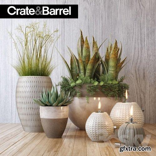 Crate & Barrel plant set