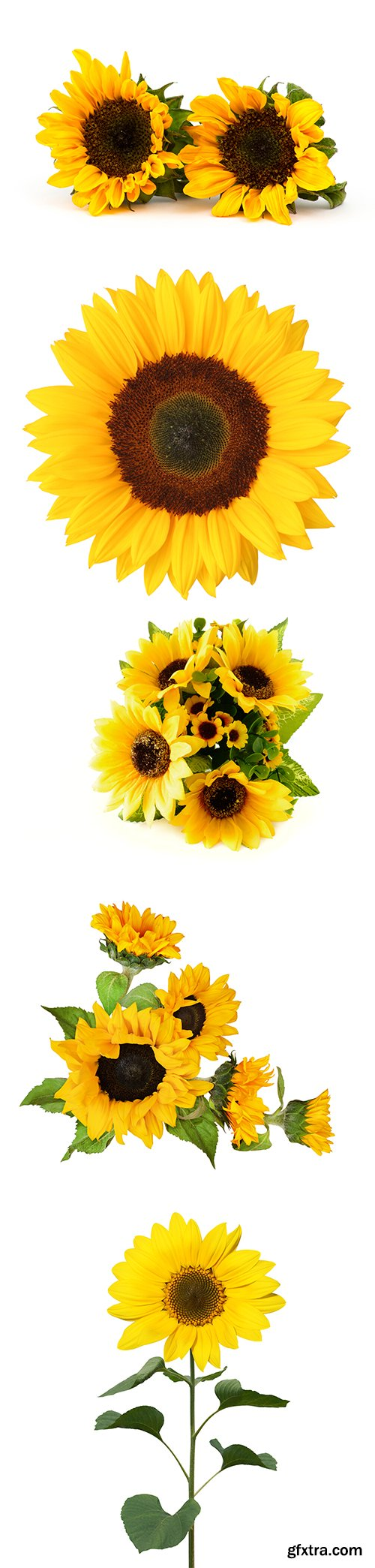 Sunflowers Isolated - 9xJPGs