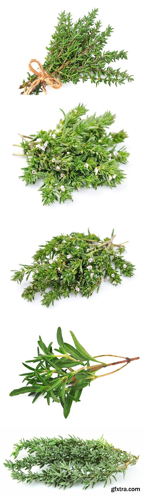 Thyme Herb Isolated - 10xJPGs