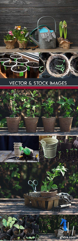 Gardening planting of seedling and garden stock