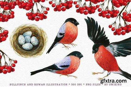 Bullfinch and rowan illustration
