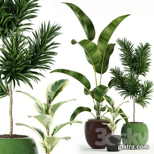 Plants collection 85