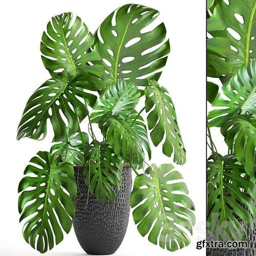 Monstera 6 3D Plant Model