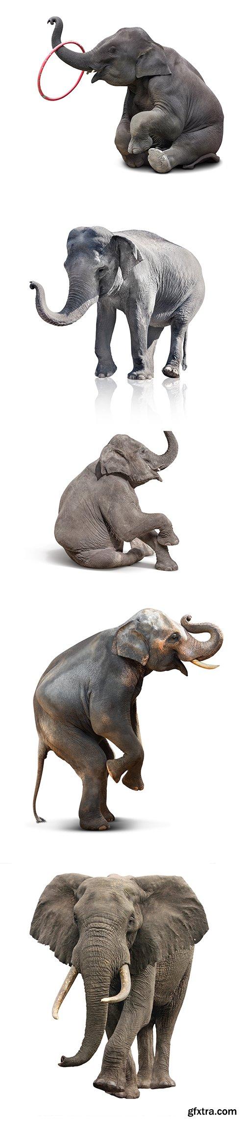 Elephant Isolated - 15xJPGs