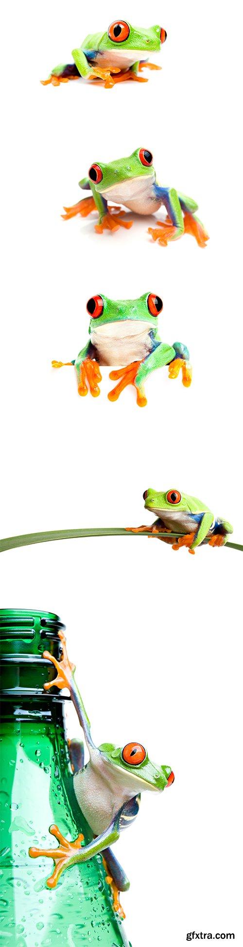 Frog Isolated - 10xJPGs