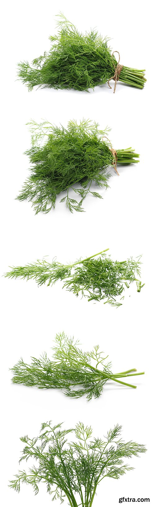 Green Dill Isolated - 10xJPGs