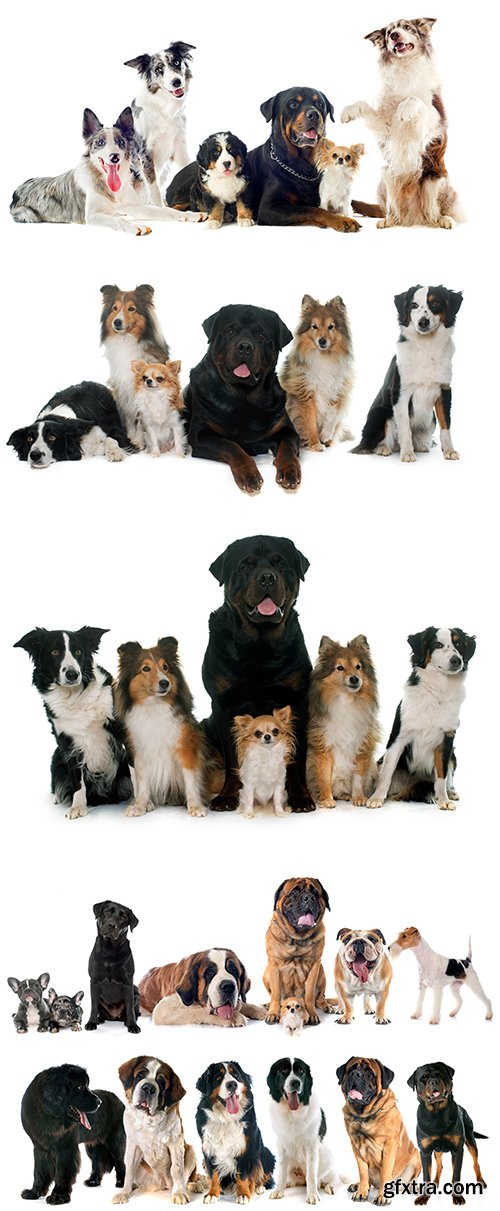 Group Of Dog Isolated - 10xJPGs