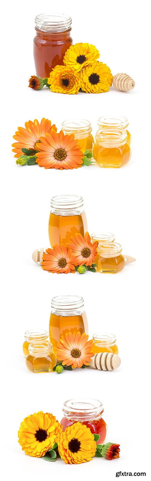 Honey And Calendula Flowers Isolated - 15xJPGs