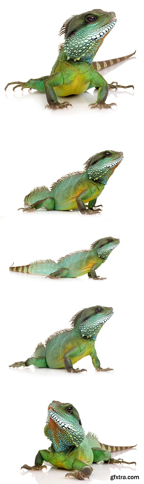 Indian Water-Dragon Isolated - 6xJPGs