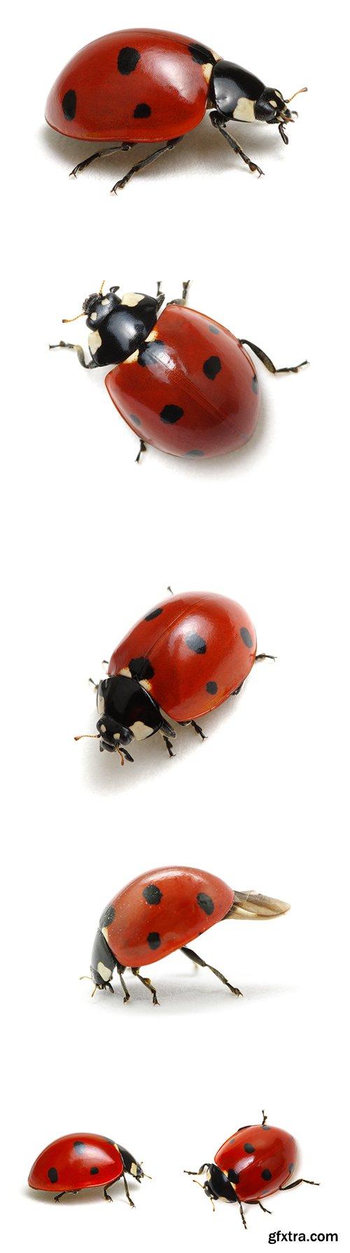 Ladybugs Isolated - 13xJPGs
