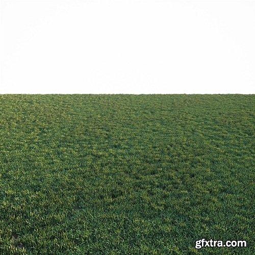 Simple Grass 3d Model