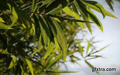 Maxtree - Plant Models Vol. 18