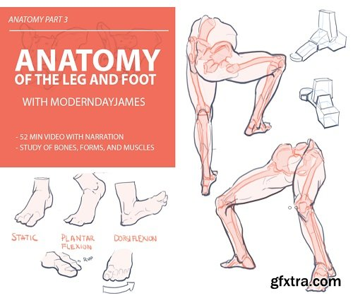 Gumroad – Anatomy 3: Leg and Foot