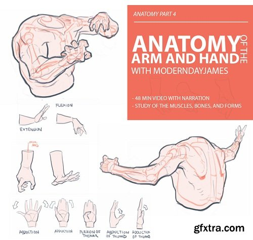 Gumroad – Anatomy 4 - Arm and Hand