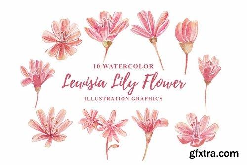 10 Watercolor Lewisia Flower Illustration Graphics