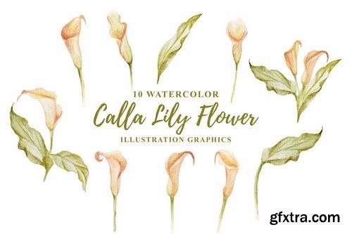 10 Watercolor Calla Lily Flower Illustration