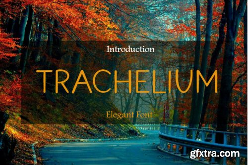Trachelium Font