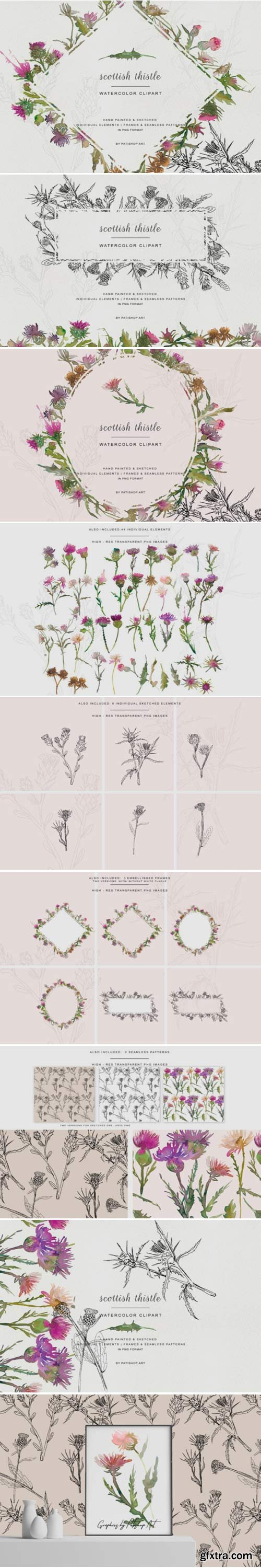 Hand Painted & Sketched Thistle Clip Art 1584504