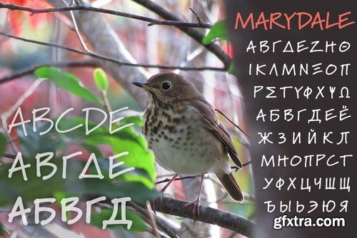 CM - Marydale (family) 14533