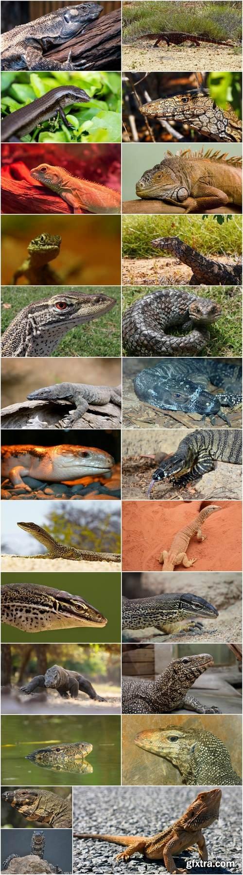 Iguana lizard dragon 25 HQ Jpeg
