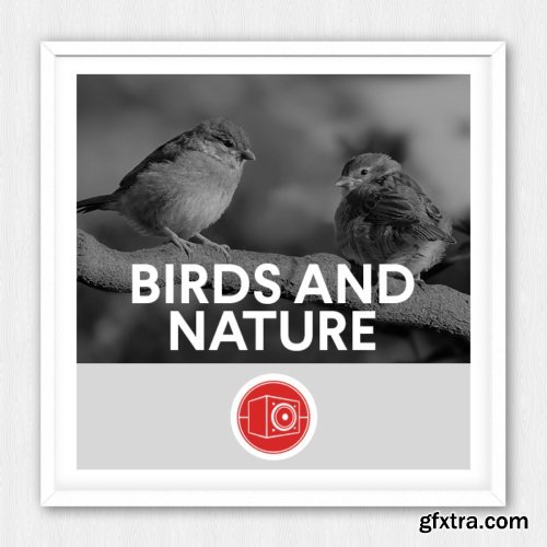 Big Room Sound – Birds and Nature