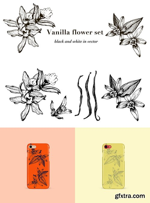 Vanilla Flower Set - Black and White in Vector