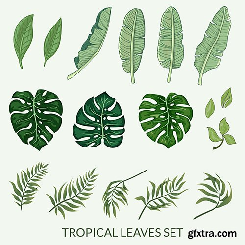 Tropical Leaves Vector Set