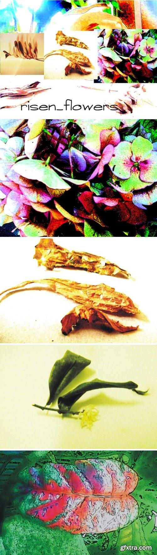 A Risen Flower 1708988