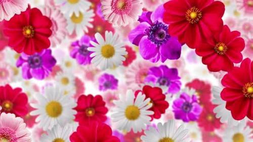 Udemy - Flower Background 4k