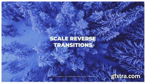 Scale Reverse Transitions 287999