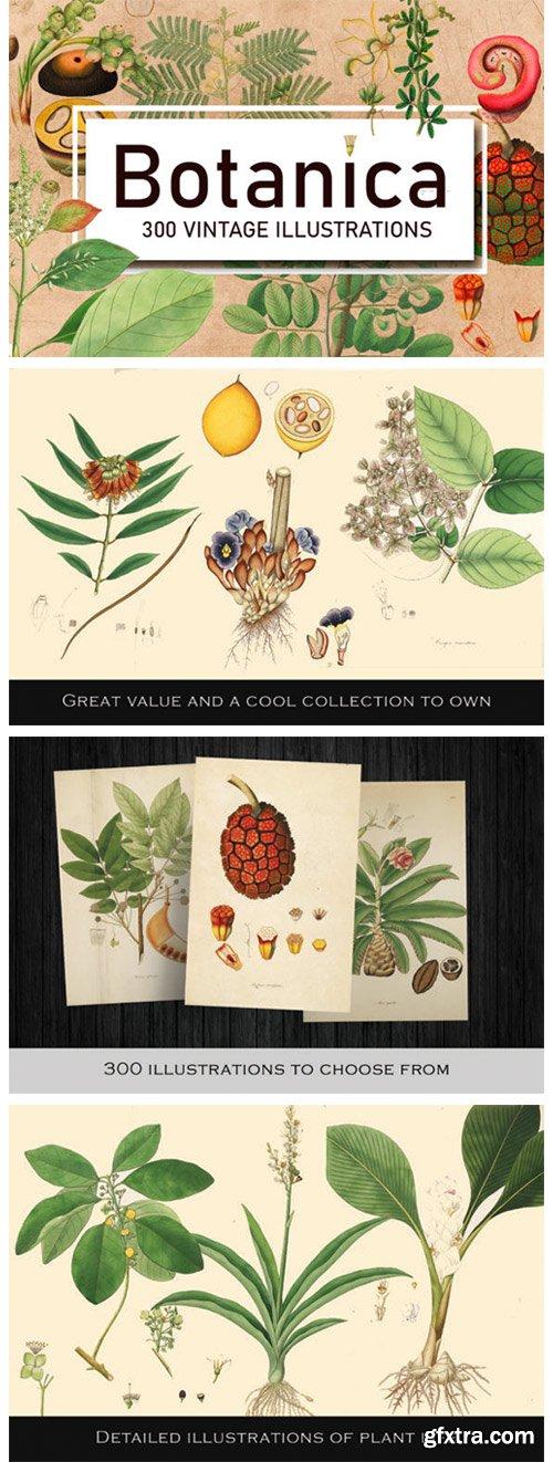 300 Antique Botanical Illustrations 1946465